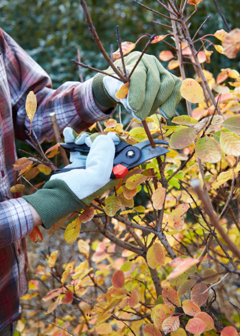 Seven_Essential_Gardening_Tasks_for_Fall_Cook_Portable_Warehouses