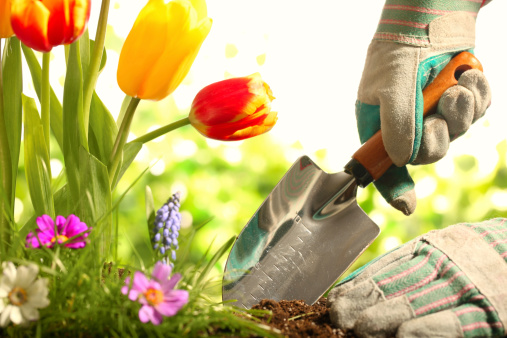 quick_easy_home_gardening_tips_spring_Cook_Portable_Warehouses