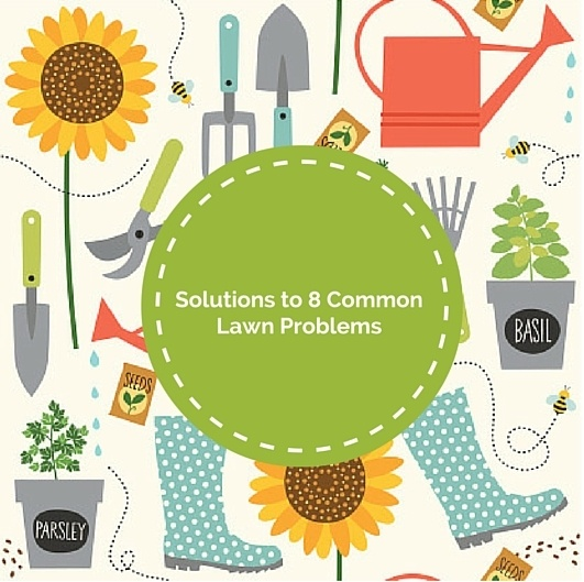 8_Common_Lawn_Problems_and_How_to_Fix_Them_Cook_Portable_Warehouses