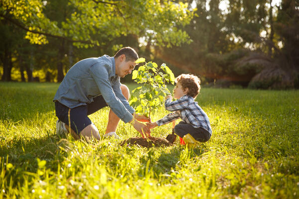Planting Trees in your backyard