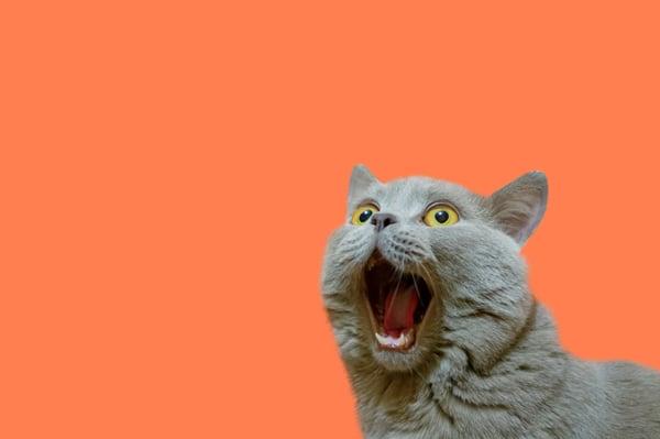 Excited-Cat---AdobeStock_264154131