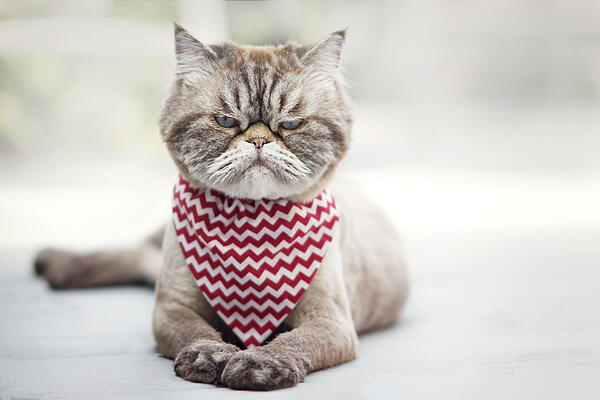 Grumpy-Cat----AdobeStock_122233442