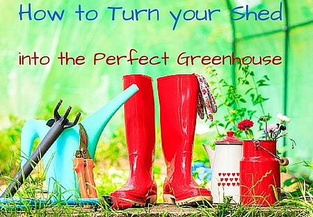 How_to_Turn_your_Shed_into_Perfect_Greenhouse_Cook_Portable_Warehouses