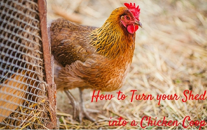 How_to_Turn_your_Shed_into_Chicken_Coop_Cook_Portable_Warehouses