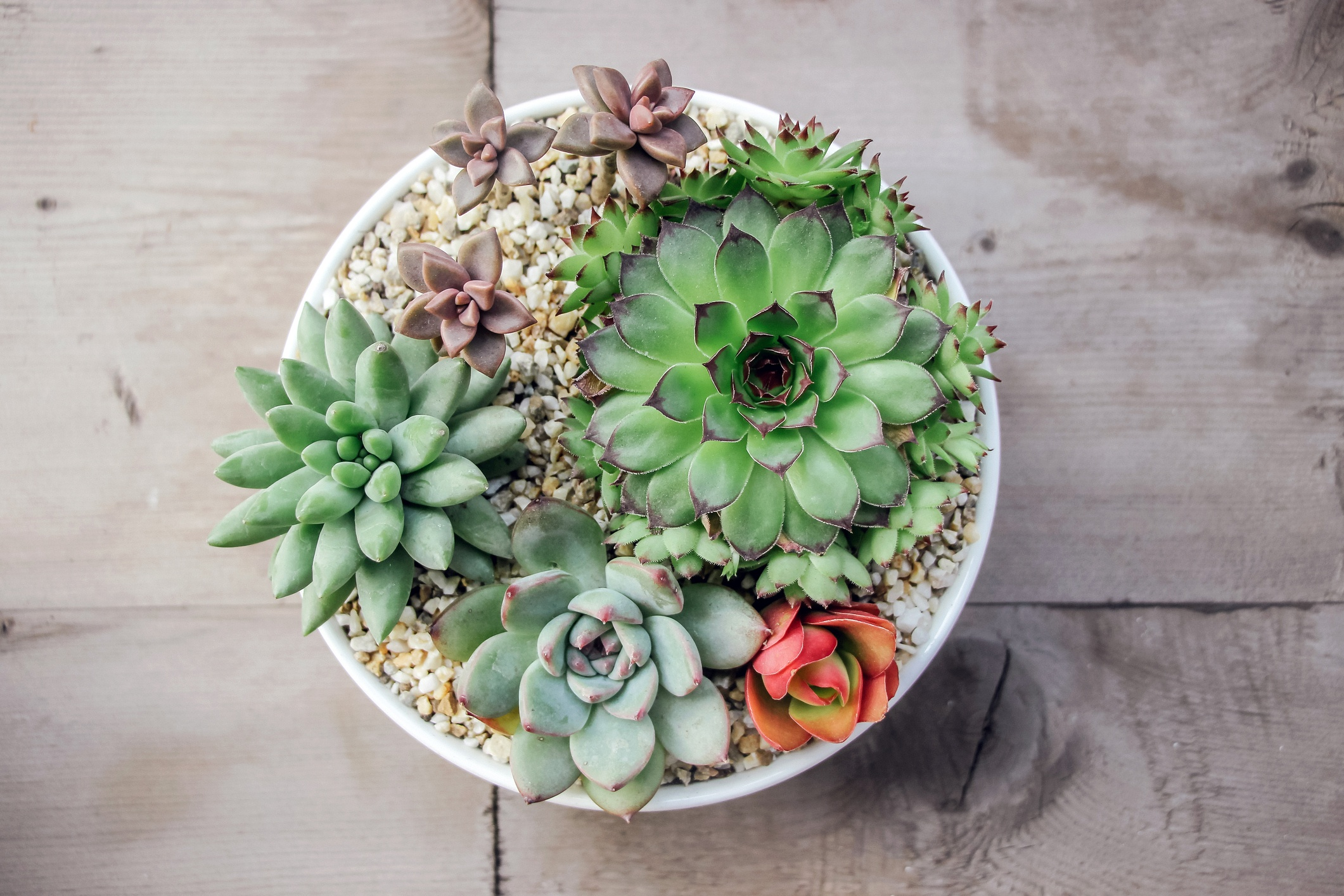 Add succulent plants to your home + Cook Portable Warehouses