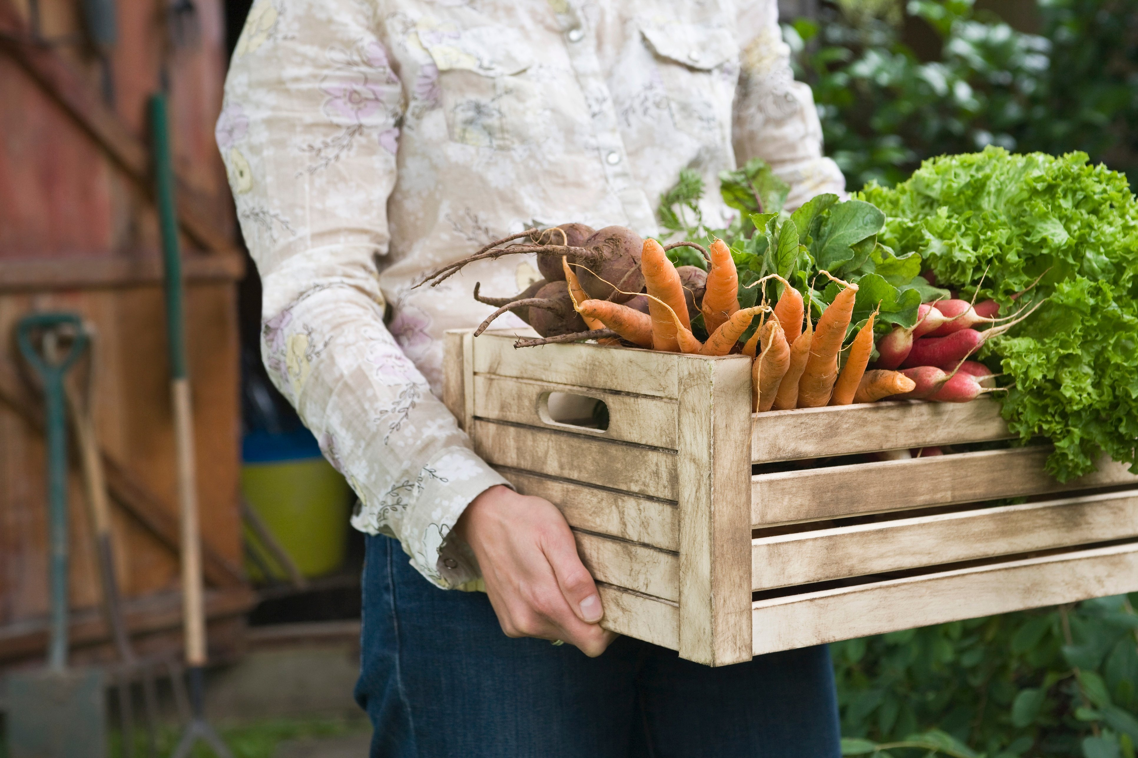 Tips on Storing Food In Your Shed