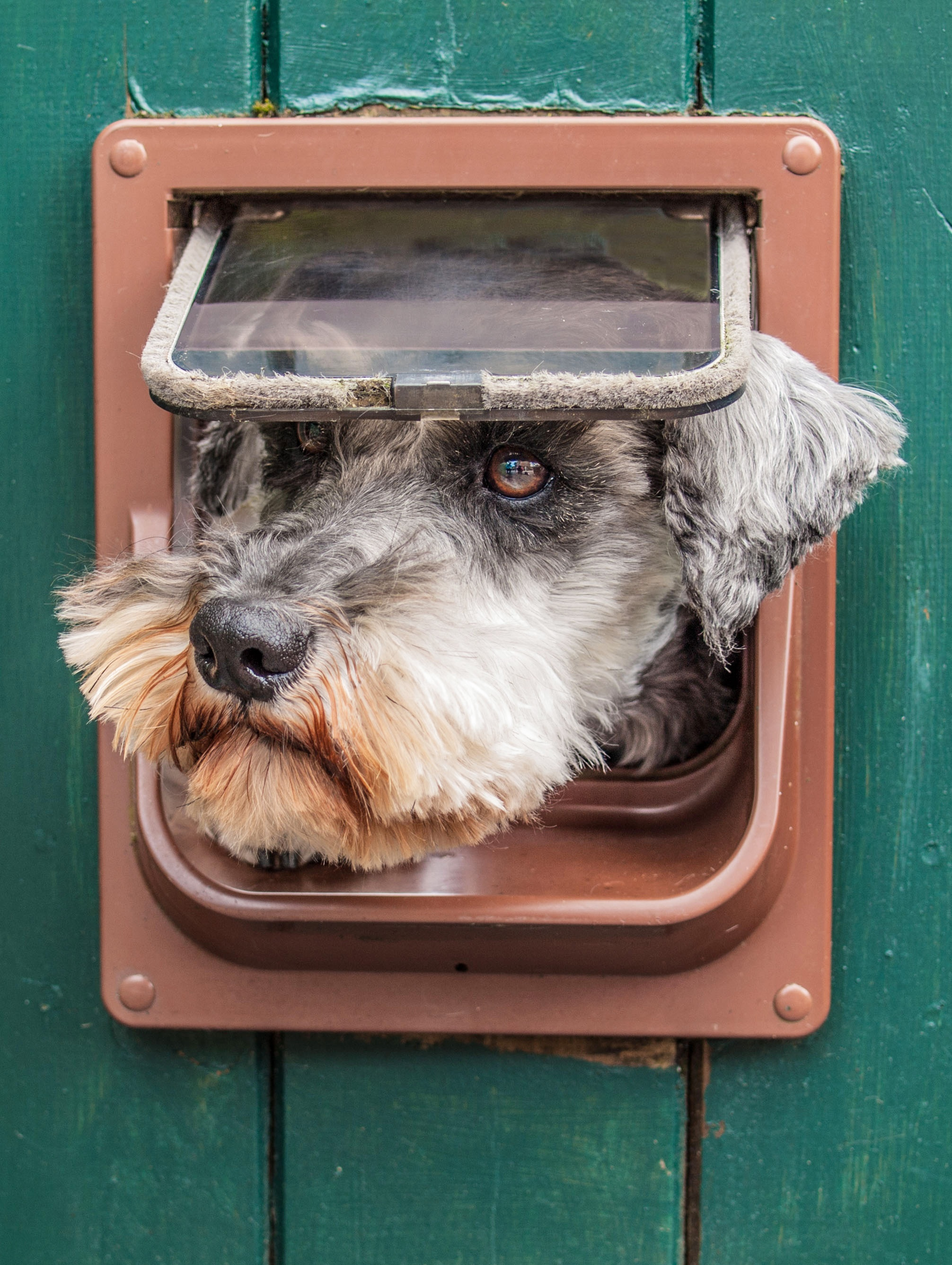 Add a doggie door to your Shed  + Cook Portable Warehouses