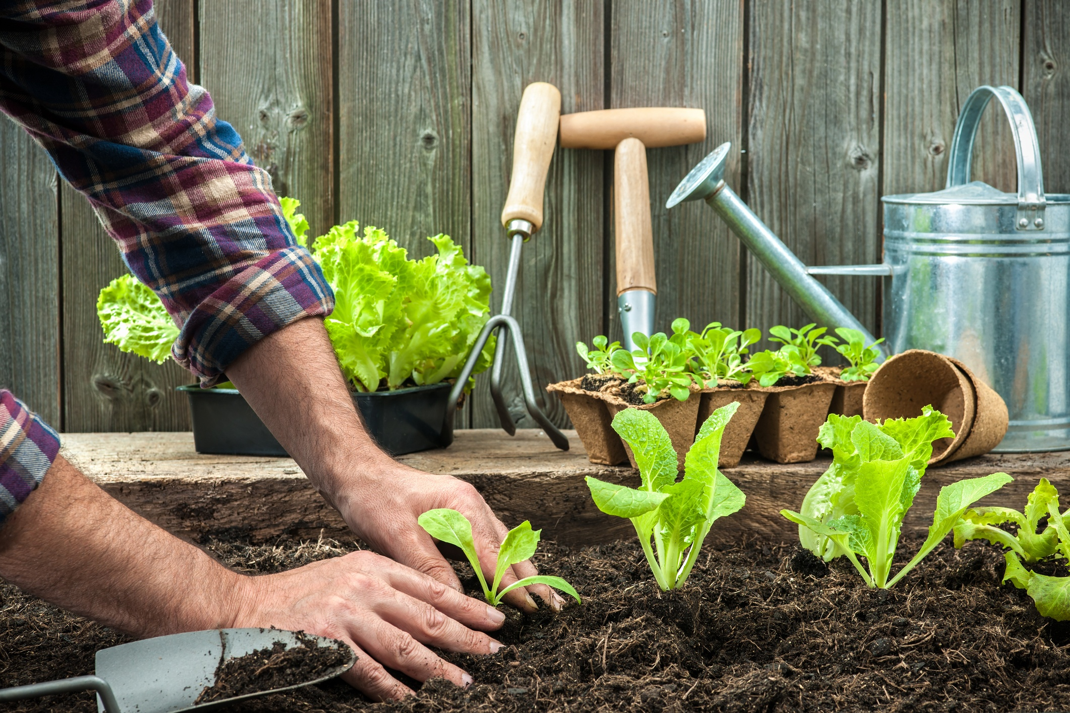 Prepare Your Garden in Early Spring