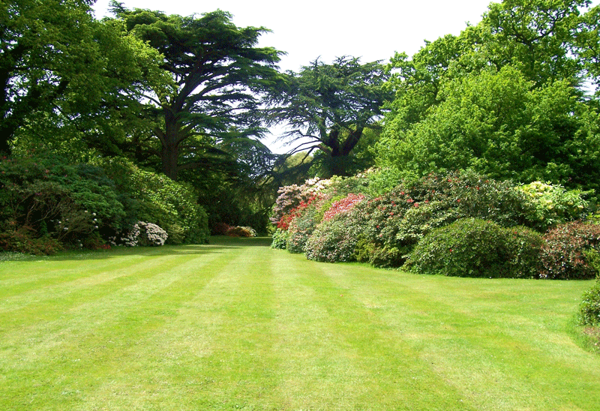 lawn-2